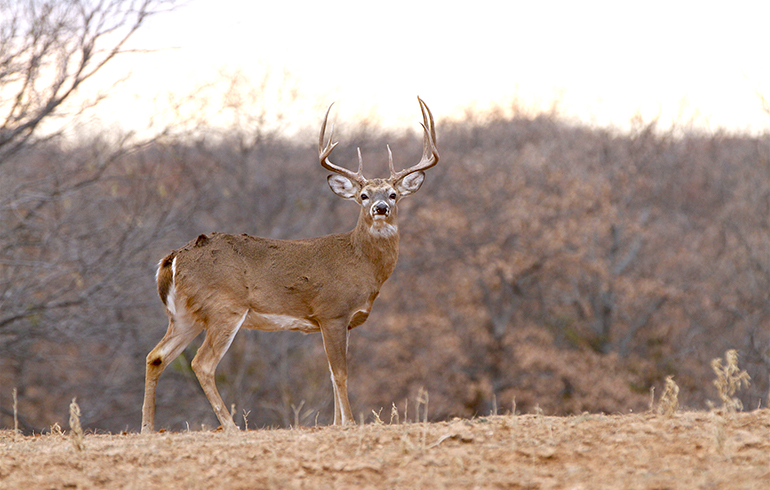 Animal Targets Cure Buck Fever