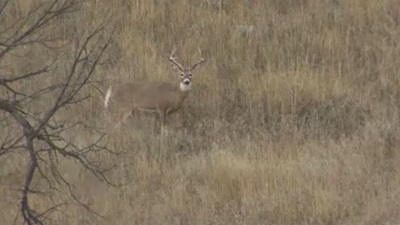 Pierre Whitetail