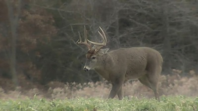 Carmen Mountains Whitetail
